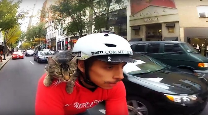 Coolest Cat Video Ever: MJ the Cycling Cat